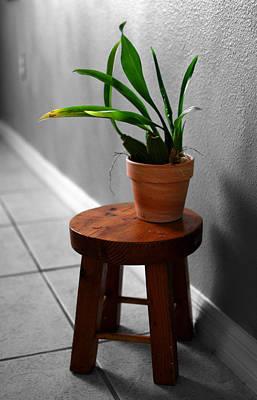 Photograph - A Room With A Plant by Amanda Vouglas