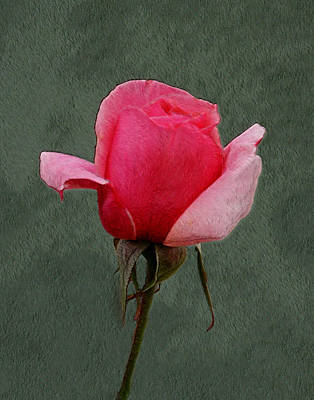 Photograph - A Rose 2 by Ernie Echols