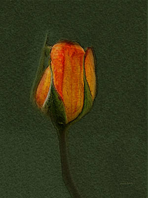 Photograph - A Rose 3 by Ernie Echols