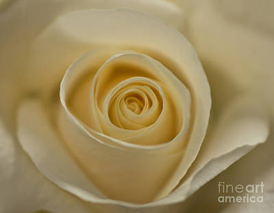 Photograph - A Rose By Any Other Name by Julie Clements