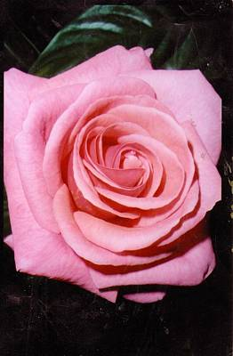 A Rose By Any Other Name Would Still Smell Just As Sweet Art Print by Anne-Elizabeth Whiteway