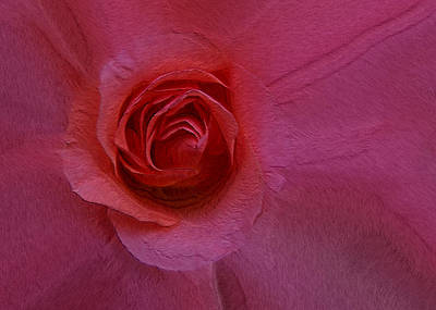 Photograph - A Rose by Ernie Echols