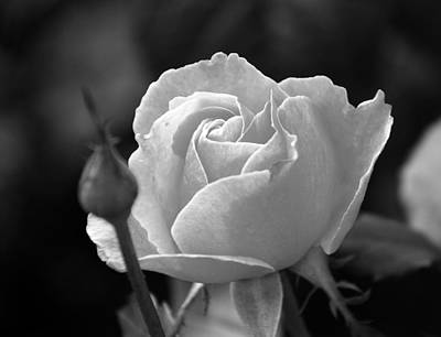 A Rose In Black And White Art Print by Janice Adomeit