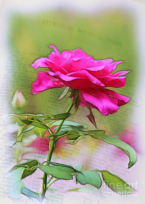 Photograph - A Rose Is A Rose Is A . . . by Judi Bagwell