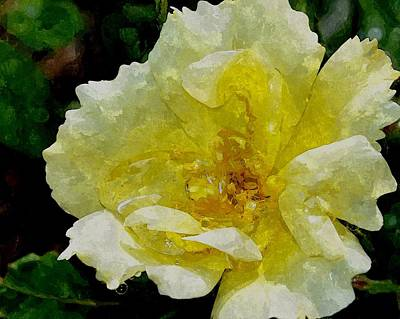 Mellow Yellow - A Rose Is A Rose RRWC by Jim Brage
