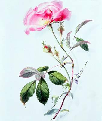 A Rose Art Print by James Holland