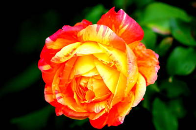 Photograph - A Rose by Jose Lopez
