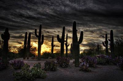 Photograph - A Saguaro Sunrise  by Saija  Lehtonen