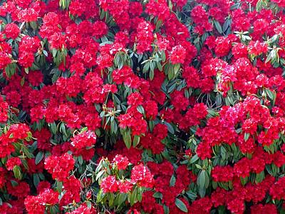 Photograph - A Sea Of Rhodos by George Cousins