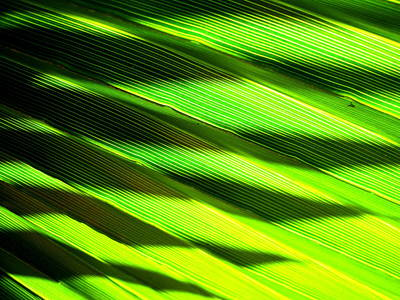 A Shadow Of A Palmfrond On A Palmfrond Art Print by Catherine Natalia  Roche