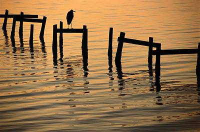 Docks Etc Photograph - A Silhouetted Heron Perches by Joel Sartore