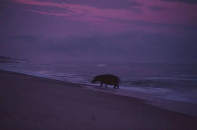 A Silhouetted Hippopotamus At Surfs Art Print by Michael Nichols