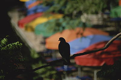 Del Rio Photograph - A Silhouetted Pigeon Surveys by Stephen St. John