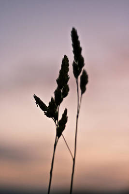 Wheat Silhouette Photograph - A Simple Life by Georgia Fowler