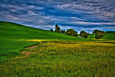 A Sliver Of Canola Art Print by David Patterson