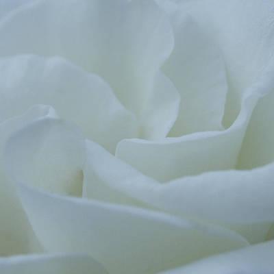 Photograph - A Soft Embrace by Jen Baptist