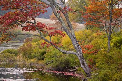 A Soft Maple Tree At Long Pond Art Print
