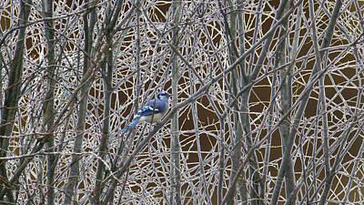 Bluejay Digital Art - A Spot Of Blue by Pamela Rivera