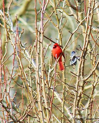 Photograph - A Spot Of Red by Lorraine Louwerse