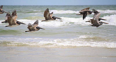 Photograph - A Squadron Of Brown Pelicans by Roena King