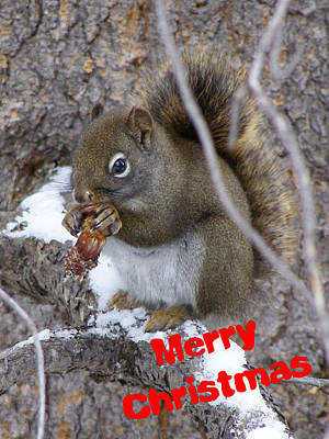 Photograph - A Squirrel Christmas by DeeLon Merritt