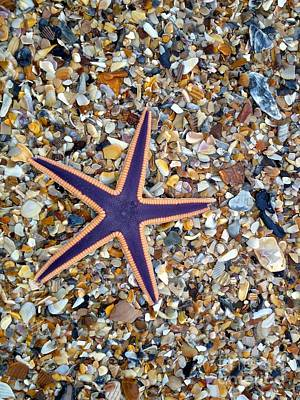 Photograph - A Star Among Us by Enid Gough