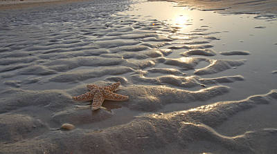 Pleasure Photograph - A Star Is Found by Betsy Knapp