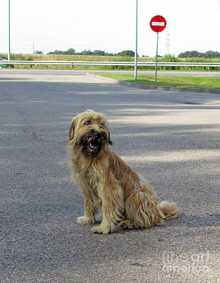 Photograph - A Stray Dog At The Gas Station by Ausra Huntington nee Paulauskaite