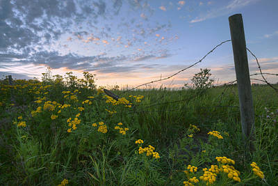 A Summer Evening Sky With Yellow Tansy Art Print by Dan Jurak