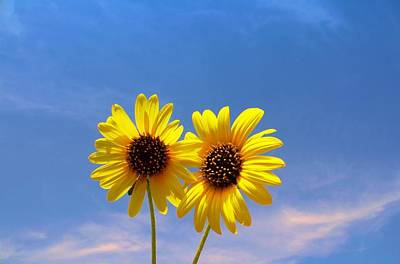 Photograph - A Sunny Pair by Lynnette Johns