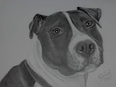 Pitbull Drawing - A Sweet Soul by Kimber  Butler
