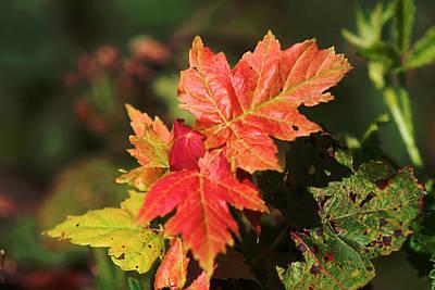 Photograph - A Taste Of Autumn by Van Corey