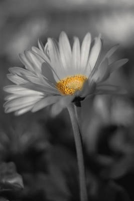 Photograph - A Touch Of Yellow by Joann Vitali
