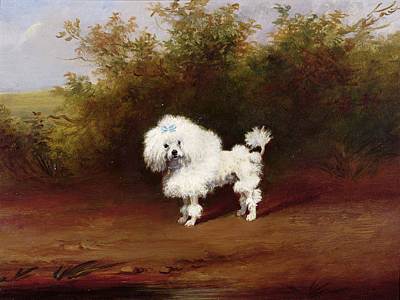 A Toy Poodle In A Landscape  Art Print by Frederick French