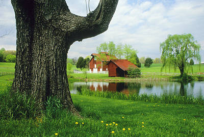 A Tree Frames A View Of A Farm Art Print