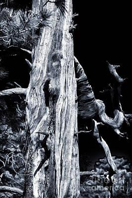 Photograph - A Tree Grows In Wupatki by John Rizzuto