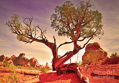 Photograph - A Tree In The Desert by Tara Turner