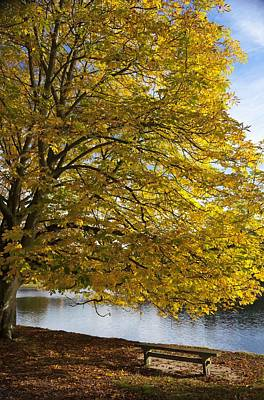 A Tree With Golden Leaves And A Park Art Print by John Short