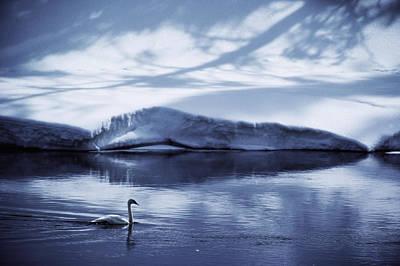 Winter Scene. Winter Landscape. Snow Landscape. Black And White. Birds Photograph - A Trumpeter Swan, Cygnus Buccinator by James P. Blair
