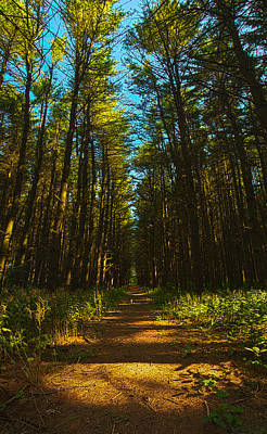 A Walk In The Pines Art Print by Phil Koch