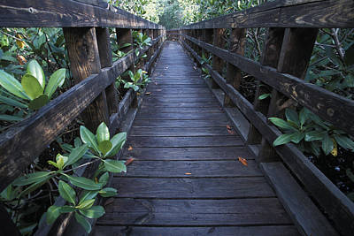 Vieques Photograph - A Walkway At A Nature Refuge On Vieques by Scott S. Warren