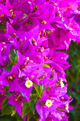 Royalty-Free and Rights-Managed Images - A Wall of Flowers by Richard Henne