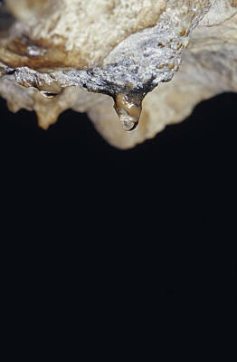 A Water Drop Seeps From A Stalagtite Print by Jason Edwards