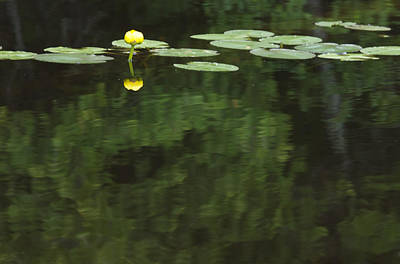 A Water Lily Is Reflected Art Print