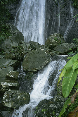 A Waterfall In El Yunque, Puerto Rico Art Print by Taylor S. Kennedy