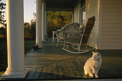 A White Cat In Sunlight On A Columned Art Print by Joel Sartore