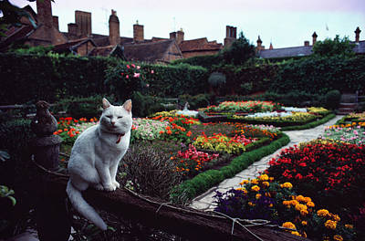Stratford Photograph - A White Cat Is Perched On A Fence by Sam Abell
