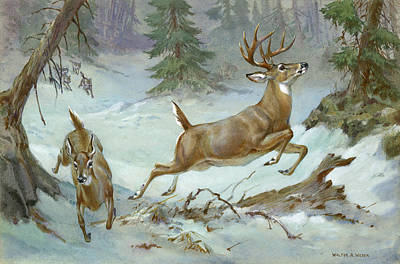 A White Tail Buck And Doe Flee Art Print by Walter A. Weber