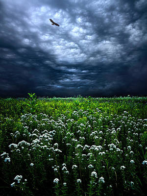 A Wild Heart Looking For Home Print by Phil Koch
