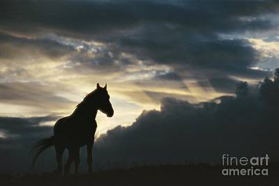 Natural Forces Photograph - A Wild Horse Is Silhouetted by Raymond Gehman